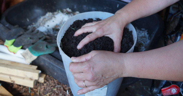 L'or noir, le vermicompost