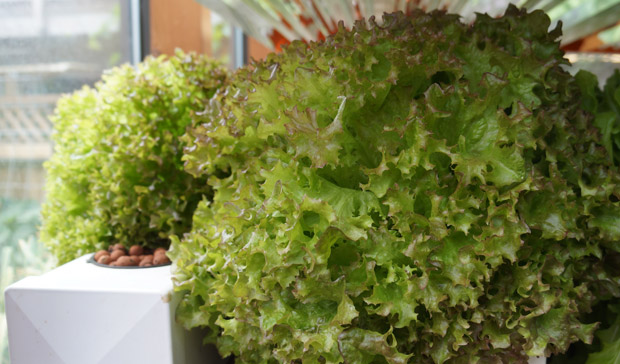 Des salades parfaites