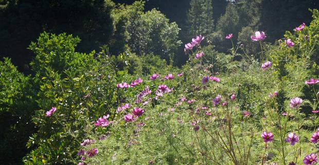 Les fleurs embellissent le paysage, créent de la biomasse et attirent les pollinisateurs.