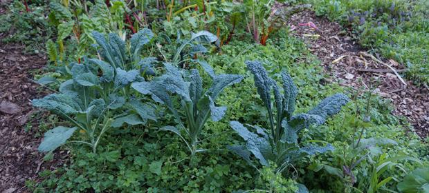 Mélanges de légumes