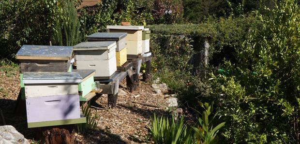 Les abeilles pollinisent le jardin sans relâche