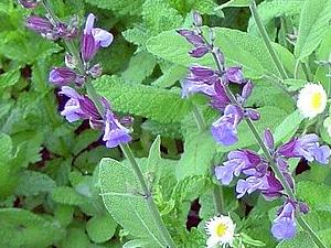 Egayez Vos Assiettes Avec Les Fleurs Comestibles Le Jardin Comestible