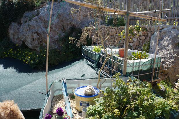 aquaponie-bassin