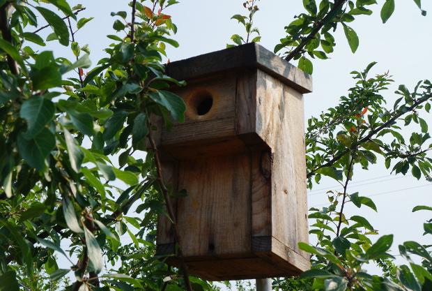 Des nichoirs incitent les oiseaux à rester