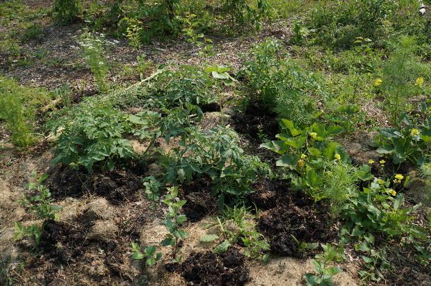 Des légumes au milieu des scions