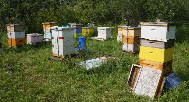 2 apiculteurs font partie de la ferme