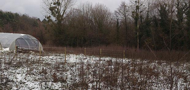 terrain_neige