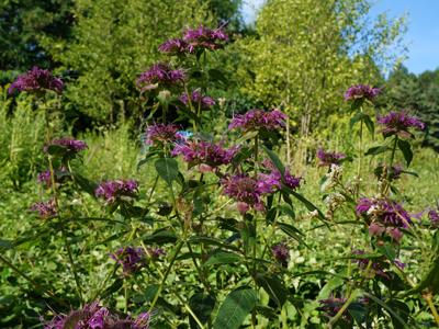 Cr ation d 39 une p pini re de plantes le jardin comestible for Jardin oriente est